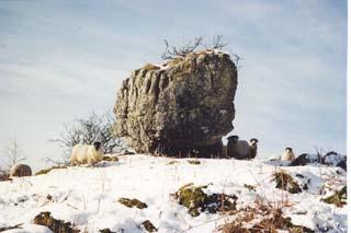 Hutton Roof And Newbiggin Nature